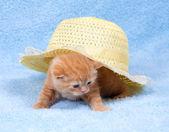 Little kitten sitting under straw hat — Стоковое фото