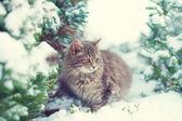 Kitten and snowy pine tree — Photo