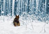 Cão de corrida — Fotografia Stock