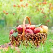Apples in basket — Stock Photo