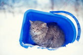 Stray cat in bucket — Stock Photo