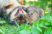 Dog and cat playing together outdoor. — Stock Photo