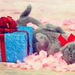 Cat lying near a blue gift — Stock Photo