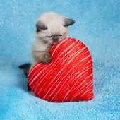Kitten holding a heart — Stock Photo