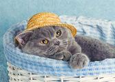 Cat is wearing hat in a basket — Stock Photo