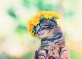 Kitten crowned with a chaplet of dandelion — Stock Photo