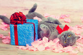 Cat lying near a blue gift — Photo