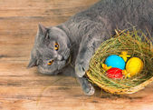 Cat sleeping near basket with eggs — Photo