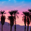 Palms against mountains at magic pink sunset — Stock Photo #46333553