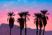 Palms against mountains at magic pink sunset — Stock Photo