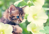 Cute little kitten in the mallow — Stock Photo