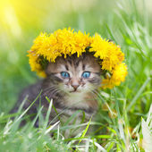 Little kitten crowned with a chaplet of dandelion — Stock Photo