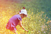 Girl picking flowers in the meadow — Foto de Stock