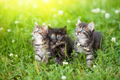 Three cute kittens in the meadow — Stock Photo