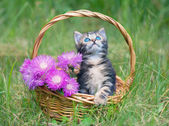 Kitten sitting in a basket with flowers — Zdjęcie stockowe