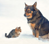 Big dog and kitten sitting in the snow — Stock Photo