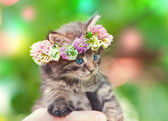 Kitten crowned with a chaplet of clover — Stock Photo
