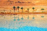 Playa tropical con palmeras — Foto de Stock