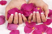 Woman's hands with french manicure — Stock Photo