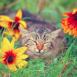 Cat sleeping in flower lawn — Stock Photo