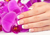 Woman's hand with perfect french manicure — Stock Photo