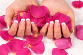 Woman's hands with perfect french manicure — Stock Photo