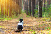 Cat in the forest — Stock Photo