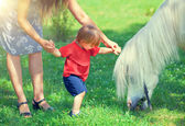 Little boy and horse — Stockfoto