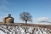 Landscape in Beaujolais — Stock Photo
