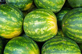 Watermelons — Stock Photo