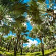 Palm trees — Stock Photo #40651753