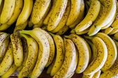 Bananas — Foto Stock