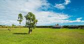 Rural farm — Stock Photo