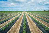 Agricultura — Fotografia Stock