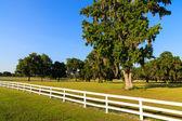 White Picket Fences — Stock Photo