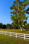 White Picket Fences — Stock Photo