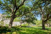 Université de Tulane — Photo