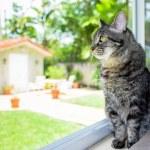 Pretty cat — Stock Photo #48105219
