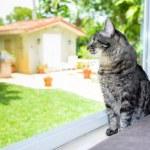 Pretty cat — Stock Photo #48105251