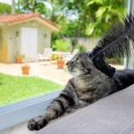 Pretty cat — Stock Photo #48105257
