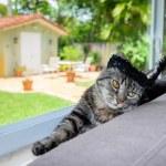 Pretty cat — Stock Photo #48105271