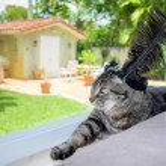Pretty cat — Stock Photo #48105281
