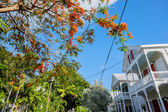 Key West homes — Stock Photo