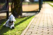 Bedlington Terrier — Stock Photo