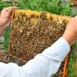 Bee beehive — Stock Photo #38256125