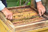 Bee beehive — Stock Photo