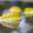 Stock Photo: Autumn leaf in water