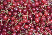 Wiśnia — Zdjęcie stockowe