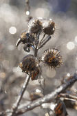 Frozen Rain (3) — ストック写真