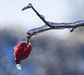 Frozen Rain (7) — Zdjęcie stockowe